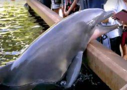 ipad-dauphin